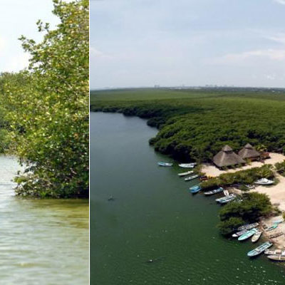 BORDEAN LA COSTA DE LA PENÍNSULA: Ventilan red de tráfico de pepino de mar a través de la laguna Chacmuchuc y Cancún
