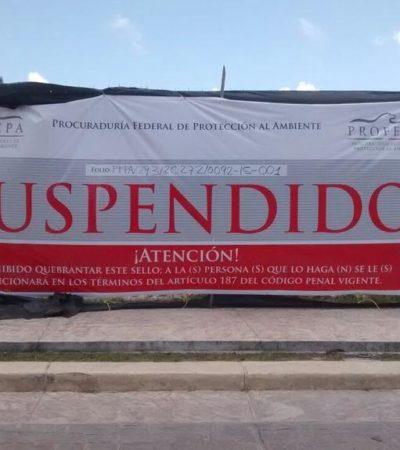 TIMORATA SANCIÓN DE PROFEPA EN MALECÓN TAJAMAR: Suspenden sólo de manera temporal polémico desmonte de manglar en Cancún