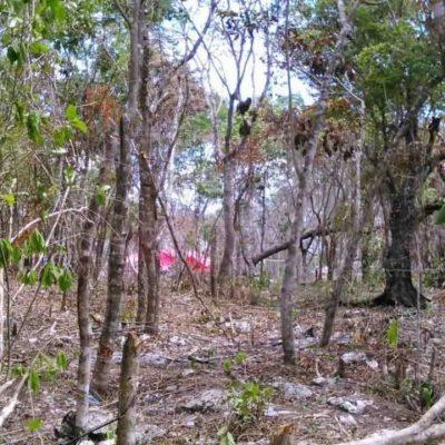 SOLAPAN NUEVA INVASIÓN EN PLAYA: Con un Ayuntamiento que se hace de la 'vista gorda', consuman otra ocupación ilegal de terrenos
