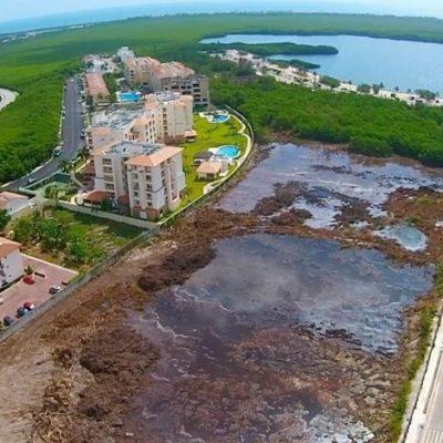 REDES CANCÚN | LAS MENTIRAS DE TAJAMAR: Ningún proyecto ha sido autorizado para desmontar manglar