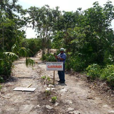RIQUEZA FORESTAL DEPREDADA: Perdió QR más de la mitad de la selva en poco más de 40 años