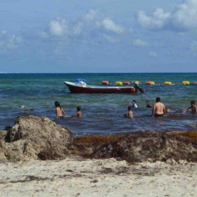 Siguen afectaciones al turismo en Playa del Carmen por el sargazo