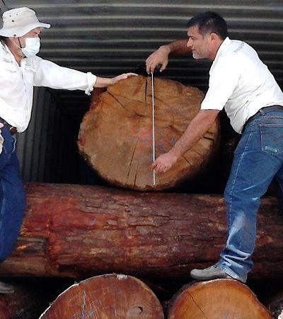 Asegura Profepa más de 150 metros cúbicos de madera en puerto de Progreso, Yucatán