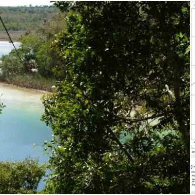 VAN TRAS LA RESERVA DEL MONO Y EL PUMA: Ex funcionario de Ivonne Ortega, planea megadesarrollo turístico en área natural protegida en Yucatán