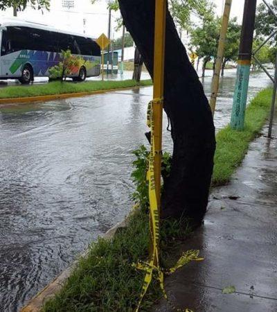 Presentará regidor panista denuncia ante la SFP por aparición de baches en calles recién pavimentadas en Chetumal donde invirtieron 100 mdp