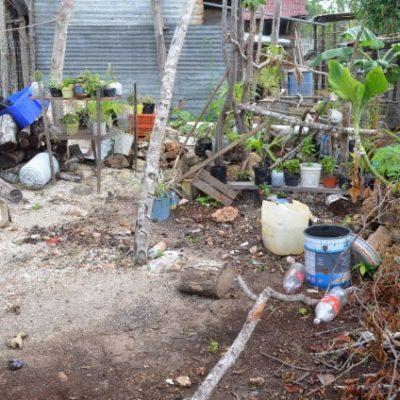 Tras las lluvias, movilizan a personal para saneamiento y control larvario para prevenir casos de dengue, paludismo y chikungunya
