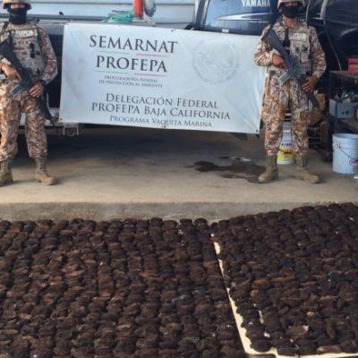 Interceptan cargamento de 137 kilos de pepino de mar en Baja California