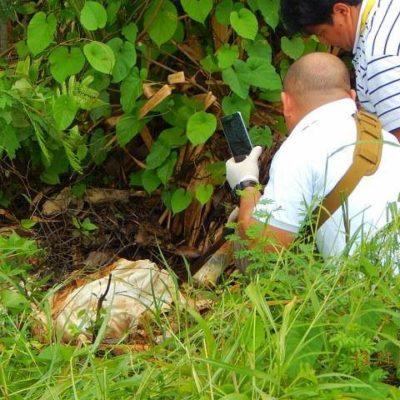 Hallan cadáver putrefacto a un costado de la carretera entre Huay-Pix y Xul-Há