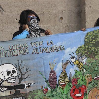 Otorga la SCJN amparo a comunidades mayas contra Monsanto y su siembra de transgénicos en la península de Yucatán