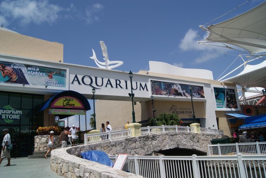 Denuncian la muerte de 4 tiburones en acuario de Plaza La Isla en Cancún