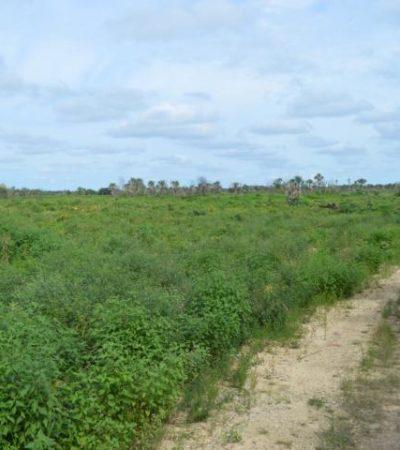 Crearán nuevo asentamiento menonita en el sur de Quintana Roo