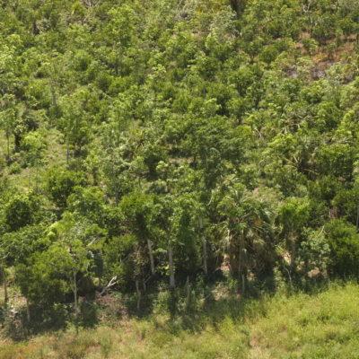 En su último año, anuncia Borge plan de 15 años para restaurar 700 mil hectáreas de selva en QR