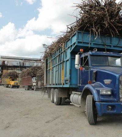 ARRANCA LA ZAFRA EN EL SUR DE QR: Pretenden cosechar un millón 500 mil toneladas de caña de azúcar