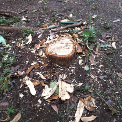 VEN LA TORMENTA Y NO SE HINCAN: Denuncian a sacerdote por mandar a cortar de tajo 6 árboles en parque de la SM 30 en Cancún