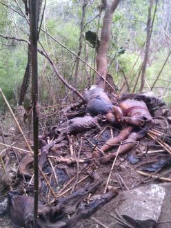 Son de al menos 15 personas los cuerpos exhumados en fosas clandestinas en Veracruz