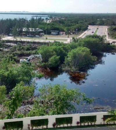 CONVOCAN A MANIFESTARSE CONTRA ECOCIDIO EN CANCÚN: Indigna operativo para desmontar y rellenar el manglar en Malecón Tajamar