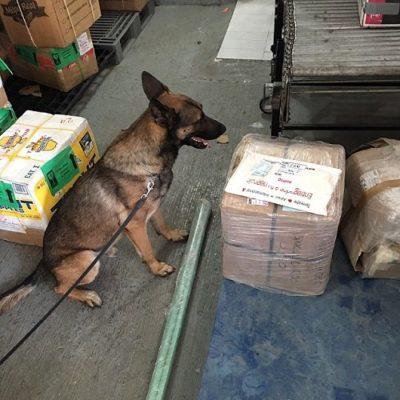 Con perro amaestrado, detectan paquete con 100 pastillas de metanfetaminas en aeropuerto de Cancún