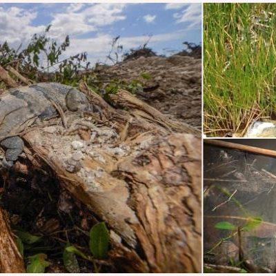 SE LE ACABA EL TIEMPO A DESARROLLADORES EN TAJAMAR: Vence el plazo para la remoción de vegetación para polémico proyecto inmobiliario