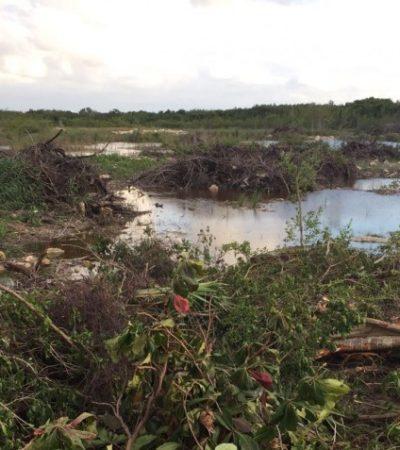 ESCALA CONFLICTO EN MALECÓN TAJAMAR: Activistas denunciarán tala de manglar en Cancún con apoyo del gobierno ante Ramsar en Suiza