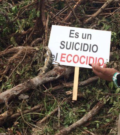 NIEGA PROFEPA ECOCIDIO EN MALECÓN TAJAMAR: Desmonte de manglar no es 'devastación ecológica', dice; dan 10 días a Fonatur para reubicar especies