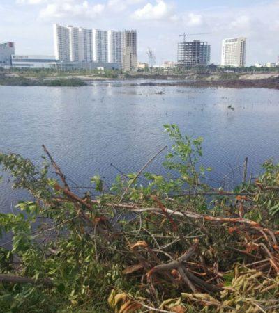 """""""FUE UNA ACCIÓN CONCERTADA"""": La devastación en el Malecón Tajamar en Cancún fue permitida por los tres niveles de gobierno, reprochan"""