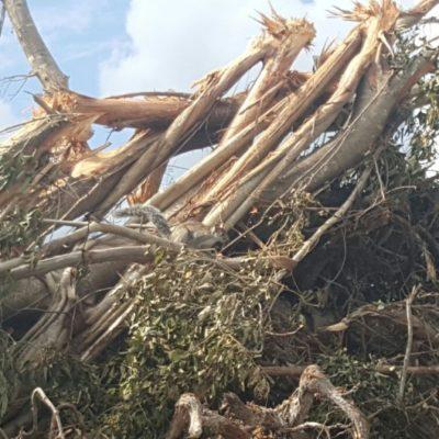 PROMOCIONANDO A MÉXICO: Dice Sectur que devastación del manglar fue 'legal'