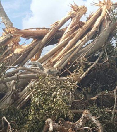 MANTUVO PERMISOS A PESAR DE IRREGULARIDADES: Acusan a Semarnat de ser cómplice de la devastación en Malecón Tajamar