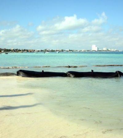 Denuncian colocación de espigones en el hotel Dreams Sands de la Zona Hotelera de Cancún