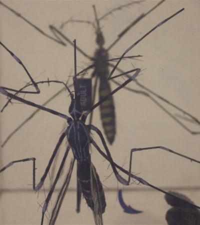 Declara la OMS alerta internacional por rápida propagación del virus zika; temen consecuencias devastadoras