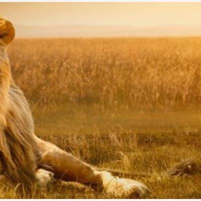 Altavoz: De 'león al acecho' a 'chivo en cristalería'
