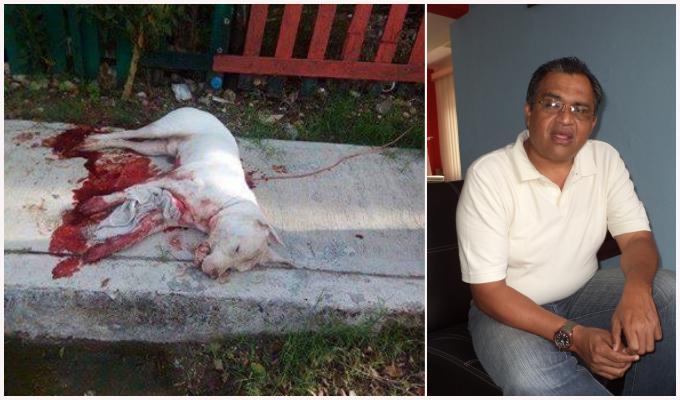 INÉDITO CASTIGO POR CRUELDAD ANIMAL: Detienen a hombre por asesinar a puñaladas a un perro en Chetumal