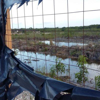 ORDENAN A FONATUR 'RESCATE' DE TAJAMAR: Da Profepa plazo de 4 días para cumplir con traslado de fauna y vegetación en zona devastada de manglar