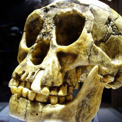 Fósiles de los 'hobbits' de Indonesia son más antiguos que lo pensado