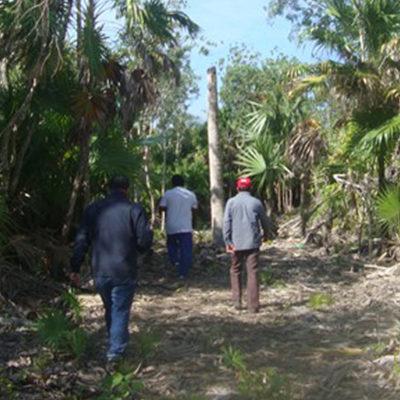 Por remoción de manglar y palma chit, clausura Profepa dos predios en el Ejido Calderitas