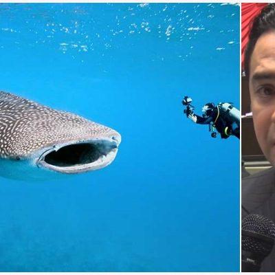 Respalda diputado Toledo reforma de ley para reforzar la protección al tiburón ballena, uno de los principales atractivos de QR