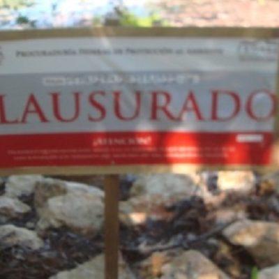 Clausura Profepa predio en OPB por remoción de manglar y relleno de humedal
