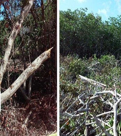 Clausura Profepa 2 predios en la zona continental de Isla Mujeres por desmonte de manglar