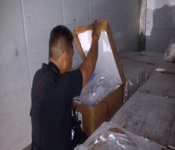 Decomisa PGR más de 2 toneladas de pepino de mar en el aeropuerto de Cancún