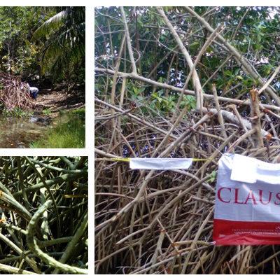 Impone Profepa clausura de predio por desmonte de manglar en Bahía Kantenah