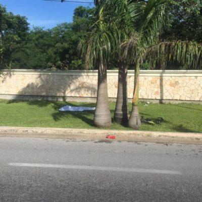 TRAGEDIA DE CICLISTAS EN LA CARRETERA: Mueren 2 personas al ser arrolladas por una camioneta entre Tulum y Playa del Carmen
