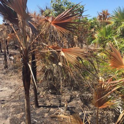 Implementarán programa de restauración en zona siniestrada de isla Holbox