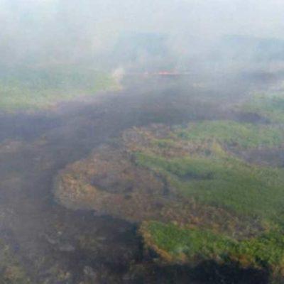 Intentan apagar incendio forestal en la Biósfera de Dzilam Bravo, en el norte de Yucatán