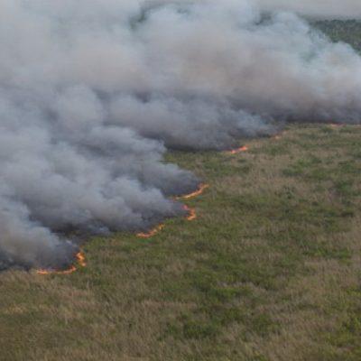 SIGUE ACTIVO INCENDIO EN DZILAM BRAVO: Continúa quemándose reserva al norte de Yucatán