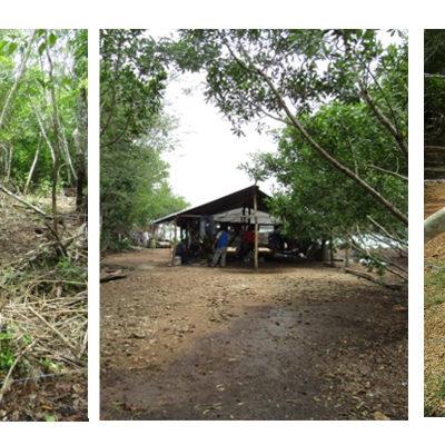 Clausura Profepa predio en Bacalar por falta de permisos de cambio de uso de suelo en terrenos forestales