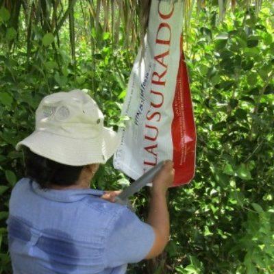 Por desmonte ilegal de vegetación, clausura Profepa 5 predios en el ejido Calderitas