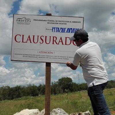 Clausura Profepa 2.6 hectáreas por cambio de uso de suelo sin autorización en Temozón Norte, municipio de Mérida