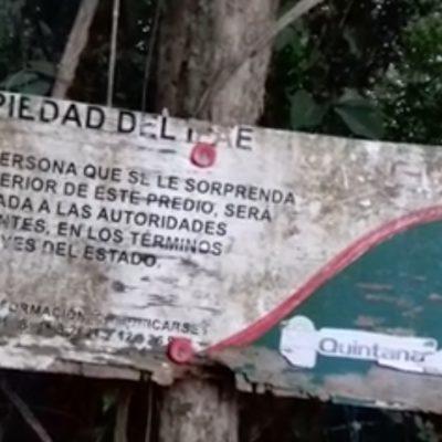 SOLAPAN MEGA INVASIÓN EN TULUM: A una semana del nuevo gobierno, cientos intentan apropiarse de 15 hectáreas de terrenos del IPAE; abren puerta al diálogo