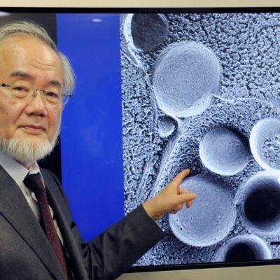 """""""AUTOFAGIA, DE ESO SE TRATA LA VIDA"""": Dan Nobel de Medicina a japonés por descubrimientos relacionados con la degradación y reciclaje de los componentes celulares"""