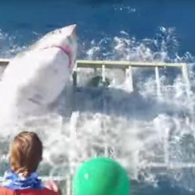 Presenta Conanp denuncia para investigar incidente con tiburón blanco en Baja California