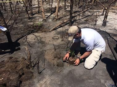 Inicia Conanp restauración tras incendio en isla Holbox